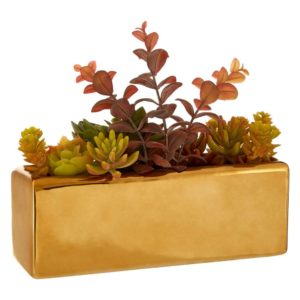 Mixed Succulents Ceramic Gold Pot Fiori